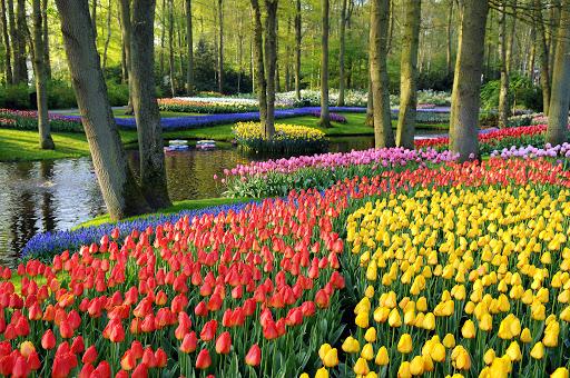 viaje en privado a Holanda
