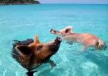 viaje a las Bahamas