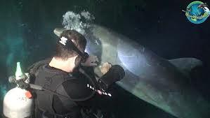Delfin pide ayuda