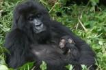 Parque Natural en el Congo