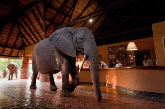viajar a zambia