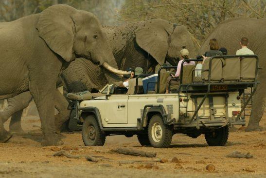 safari en