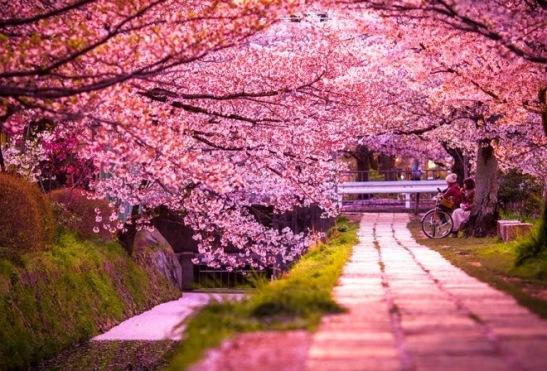 DIB Japó