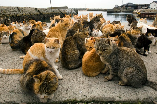aoshima-cat-island-japan-1