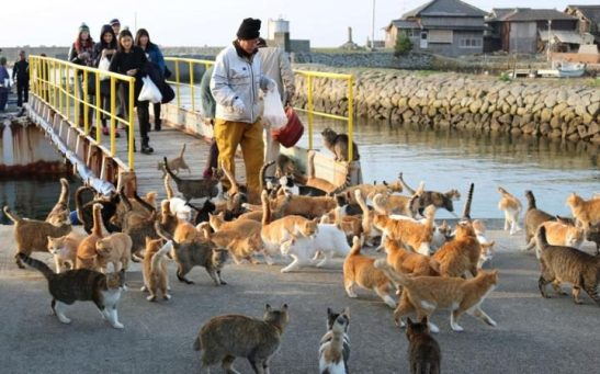 cats-2-large_trans++qVzuuqpFlyLIwiB6NTmJwfSVWeZ_vEN7c6bHu2jJnT8