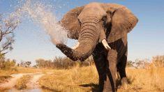 nws-st-botswana-elephant-spraying-water